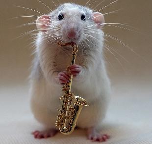 милая-крыса